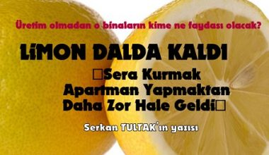 LİMON DALDA KALDI