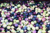 Mut zeytinyağı dünyaya açılıyor