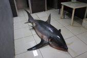 Akdeniz'de 3 günde ikinci dev köpek balığı