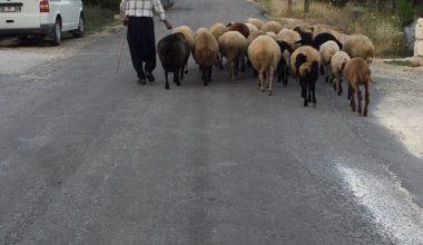 Mersin'de 615 kişi 3 milyon lira çoban desteği ödemesi aldı