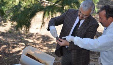 Mersin'de çam kese böceği ile biyolojik mücadele başladı