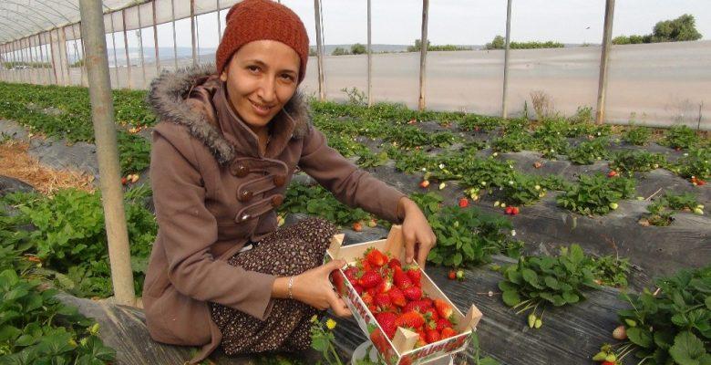 Mersin'den Irak'a çilek ihracatı başladı