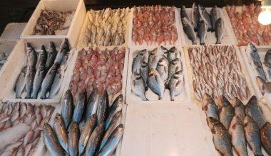 Mersinli balıkçılar sezonu buruk kapattı