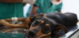 Silahla vurulan ve trafik kazası geçiren iki köpeğe Mersin Büyükşehir Belediyesi sahip çıktı