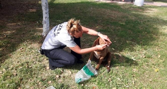 Sokak köpeğini bıçaklayarak ölüme terk ettiler