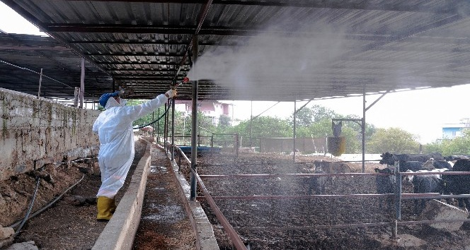 Tarım ve hayvancılık yapılan alanlar ilaçlanıyor