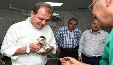 Mersin'de 6 ayda 723 kedi ve bin 583 köpeğin tedavisi yapıldı