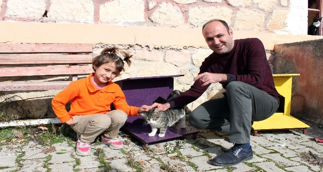 Başkan Tollu'dan 'Kedi Evi Projesi'
