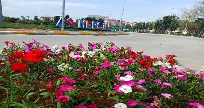 Mersin'de cadde ve sokaklar yaz çiçekleriyle renklendi