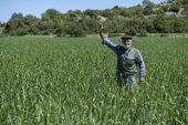 Büyükşehir'den Kaliteli Ve Genetiği Değiştirilmemiş Buğday Üretimine Destek