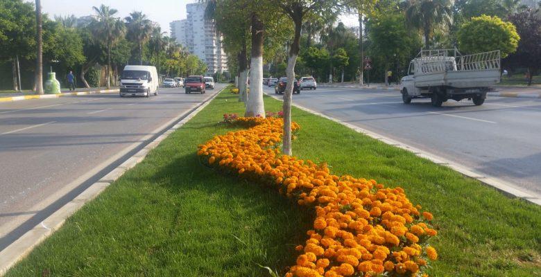 Büyükşehir'den park, bahçe ve refüjlere bakım