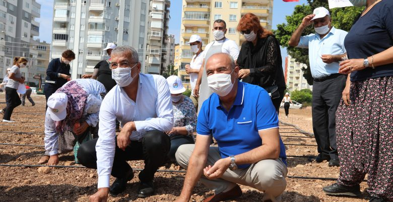 Kentin Merkezinde Mısır Üretimine Başladılar