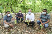 Başkan Tarhan çiftçilerle birlikte üzüm hasadı yaptı
