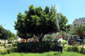 Akdeniz de park ve yeşil alanlara yönelik bakım ve ilaçlama