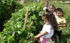 Şehrin Merkezinde Doğayla İç İçe Eğitim