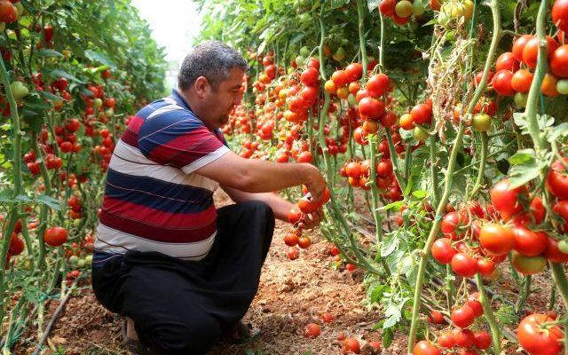 Erdemli Belediyesinden örnek proje