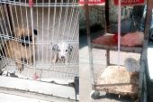 Şikayetler üzerine pet shoplar denetlendi