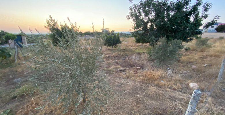 Şehit Soydan adına yapılan hatıra ormanı, 2B kapsamında birine mi veriliyor?