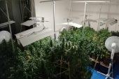 Evinde uyuşturucu yetiştiren şahsa operasyon