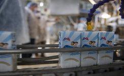 Büyükşehir belediyesi, öğrencilere 1,5 milyon kutu süt dağıtılacak
