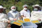 Erdemli'de yılın ilk balı hasat edildi