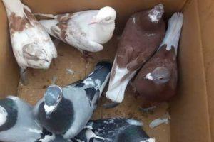 Mersin Kuş Pazarının kapatılması isteniyor